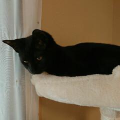 猫と暮らす ペット共生/猫と暮らす/猫 ミー君です。保護猫三きょうだいの男の子。…