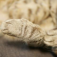 猫と暮らす/猫と共生/猫と暮らす ペット共生/猫 ピコです。丸い手。