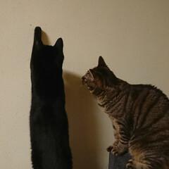 保護猫/多頭飼い/猫のいる生活/猫のいる暮らし/フォロー大歓迎 小さな虫を発見したミー君とピコさん。先に…