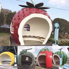 かわいい/バス停/フルーツ/九州/長崎旅行/長崎/... *2019.4.15* こんばんは(*´…