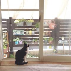 お庭/多肉植物/ガーデニング/グリーンのある暮らし/ねこ/ペット/... こんにちは♡ ぽかぽか陽気で気持ちいい⋆…