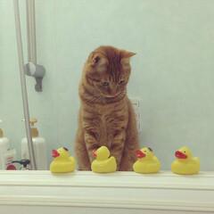 お風呂/ペット/ダイソー/ねこ/にゃんこ/猫 はじめまして( ´͈ ᗨ `͈ )◞♡⃛…