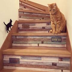 猫と暮らす/セリアリメイク/100均リメイク/リメイクシート/リメイク/リメイクシートで大変身/... *2020.4.19* こんばんは(*´…
