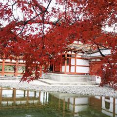 京都/もみじ/紅葉/フォロー大歓迎/おでかけ/風景/... 3連休で京都に行ってきましたー よく見て…