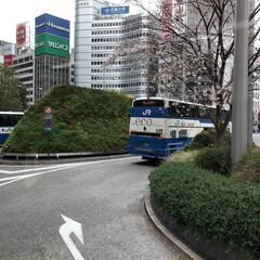 東京駅/桜/LIMIAおでかけ部/おでかけ/旅行/風景/... 楽しかった東京観光✨ これから寒い北海道…