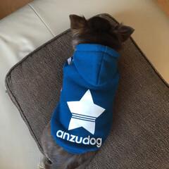 チワワのいる生活/チワワ画像/チワワ/フォロー大歓迎/ペット/犬/... ハミコさんのお洋服を買いました。 星マー…(2枚目)