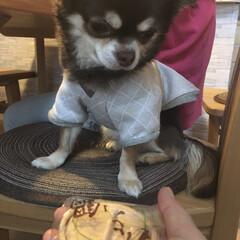 可愛い/チワワ画像/チワワ/フォロー大歓迎/犬/わんこ同好会/... 今日はこのお菓子が気になる〜。 お菓子を…(1枚目)