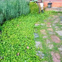 ズボラ/園芸/外構/ガーデン/エクステリア/住まい ズボラ視点でつくる ローメンテナンスの庭…