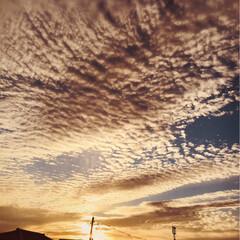 ハーゲンダッツ新商品/ムーミン/クックパッド/カルディ コーヒークリーム/うろこ雲 今日のうろこ雲、怖いぐらいでしたが、秋の…