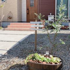 ユーカリグニー/ユーカリ/寄せ植え/ビオラ/ガーデン雑貨/ガーデニング/... 手前の木製プランターに、アリッサムとシュ…