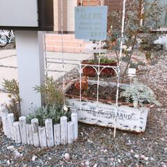 ガーデン雑貨/ナチュラルガーデン/雑貨/住まい/暮らし 最近のお庭(❁´ω`❁)  地面のヒメイ…