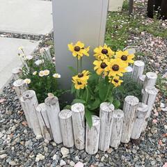 柵/ガーデン雑貨/ガーデニング/おすすめアイテム/雑貨/暮らし/... ホームセンターにて、夏らしい黄色いお花を…