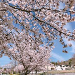 桜満開/桜/春のフォト投稿キャンペーン/平成最後の一枚/フォロー大歓迎/令和カウントダウン/... 今日のお出かけワンショット♡♪  明日か…