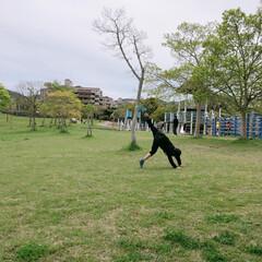 公園/自然/フォロー大歓迎/GW/おでかけ/わたしのGW GWのお出かけ♪ 近場の公園へヽ(*^^…