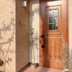 玄関周り/オリーブの木/オリーブ/玄関/フォロー大歓迎/住まい/... こんにちは(❁´ω`❁)♩ ホームセンタ…