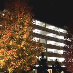 夜/風景/夜の一枚/紅葉/木/秋 夜、PTAバレーに行く途中に見た紅葉して…