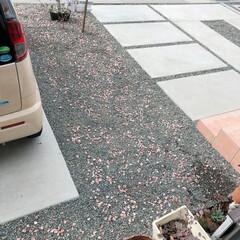 ガーデニング/砂利/フォロー大歓迎/冬/おうち/雑貨/... 冬でヒメイワダレソウも枯れて、砂利の庭が…