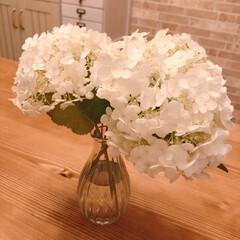 紫陽花/あじさい/ナチュラルインテリア/アナベル/夏インテリア 今年はアナベルが綺麗に咲いてくれました(…
