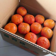 奈良/カキ/柿/暮らし/フォロー大歓迎 義母から送られてきた奈良の柿~(❁´ω`…