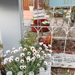 ナチュラルガーデン/ガーデニング/雑貨/住まい/暮らし 暖かい日もあり庭も賑やかになってきました…