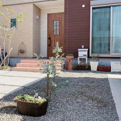 玄関ドア/ガーデニング/ガーデン雑貨/ビオラ/寄せ植え/ユーカリ/... 庭を引きで...♪  砂利敷きをどうにか…