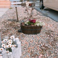 ヒメイワダレソウ/砂利/ガーデニング/平成最後の一枚/春のフォト投稿キャンペーン/わたしのお気に入り お気に入りのヒメイワダレソウを植え付け♪…