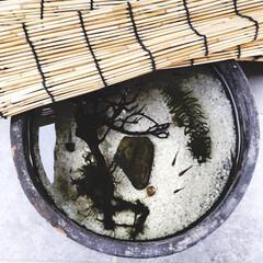 めだか/メダカ飼育/メダカの鉢/メダカ/雨季ウキフォト投稿キャンペーン/令和の一枚/... #雨季ウキフォト投稿キャンペーン   モ…