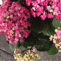 アスパラガス/紫陽花/令和の一枚 おはようございます😃🎵 今日もいい天気で…