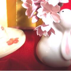 ひな祭りは旧暦でやります/写真ヘタでごめんなさい/リミ友の輪/クレイの桜/クレイフラワー/ウサギの一輪挿し/... クレイフラワーの桜が届きました✨ クレイ…(2枚目)