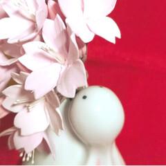 ひな祭りは旧暦でやります/写真ヘタでごめんなさい/リミ友の輪/クレイの桜/クレイフラワー/ウサギの一輪挿し/... クレイフラワーの桜が届きました✨ クレイ…(4枚目)
