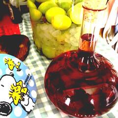 ブルーベリー酒/梅酒/グルメ/フード 遅ればせながら梅酒漬け込みました(*'ω…