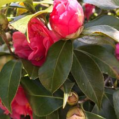 去年のだけど/わが家の庭の花/庭/花 なんか眠れないので投稿します😅  去年の…