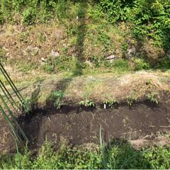 畑/令和の一枚 昨日写真撮り忘れた畑🤳  ナス、トマト、…(6枚目)