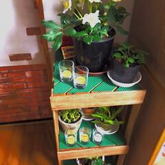 冬越し/ミルクペイント/棚/植物/すのこ/DIY/... この間叔母さんちでもらったミニオンシジュ…