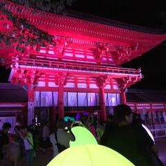 光/ライトアップ/チームラボ/下鴨神社/おでかけ 下鴨神社&チームラボのコラボイベントにて…(2枚目)