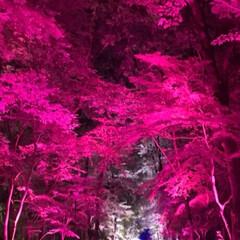 光/ライトアップ/チームラボ/下鴨神社/おでかけ 下鴨神社&チームラボのコラボイベントにて…