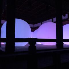 光/ライトアップ/チームラボ/下鴨神社/おでかけ 下鴨神社&チームラボのコラボイベントにて…(3枚目)