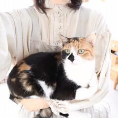 猫と暮らす/ペットと暮らす コーデの写真を撮ってると いつも抱っこし…