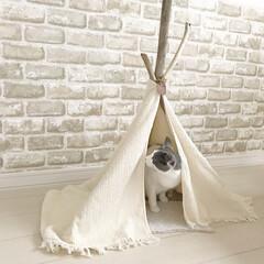 リビング/流木/DIY/インテリア/ハンドメイド 流木を使って、にゃんず用のテントを作りま…