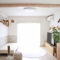 「先日リビングの窓、床、カーテン、カーペッ…」(1枚目)