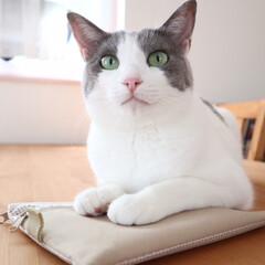 「モコです♡ 通帳ケースの上に伏せてます(…」(1枚目)