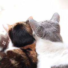 猫のいる暮らし/猫と暮らす/ペットと暮らす 後頭部も癒し♡