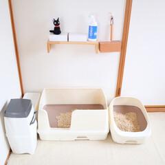 インテリア/猫 猫部屋です🐱  ご飯まわり、トイレまわり…(4枚目)