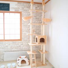 インテリア/猫 猫部屋です🐱  ご飯まわり、トイレまわり…(2枚目)