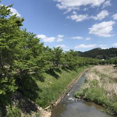 風景/はじめてフォト投稿 新緑の桜