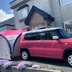 ピンク/お家時間/ハスラー/coleman/コールマン/花/... お家の芝桜が満開になってます  毎年少し…
