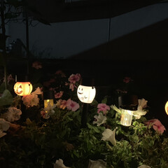 ガーデニング/ガーデンライト/ハロウィン/キャンドゥ/ダイソー/セリア/... 夜のガーデンライト  ダイソーのハロウィ…