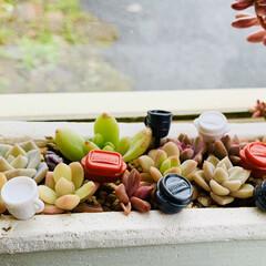 寄せ植え/ピック/お弁当ピック/お弁当/多肉植物/キッチン雑貨/... 小さな多肉植物を集めて寄せ植え  そこに…