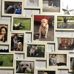 フォトフレーム/写真/ペット/猫/犬/インテリア/... 100均のフォトフレームを組み合わせて作…