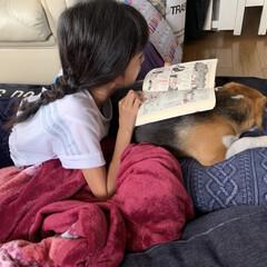 読書/ビーグル/フォロー大歓迎/わんこ同好会/DIY/ニトリ/... 朝の一枚  犬を本を読む台に使っている娘…